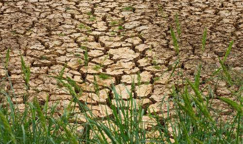 Cracked earth in a drought