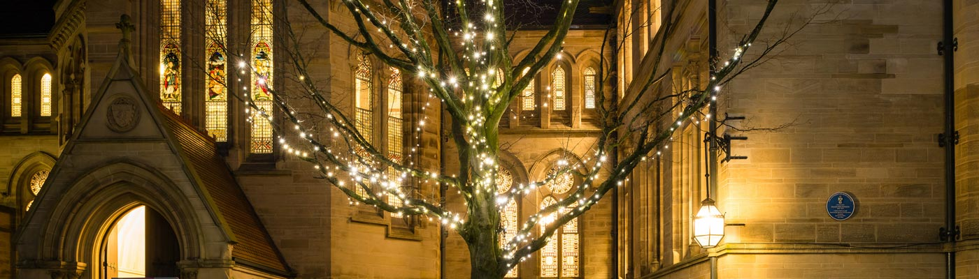 Tree adorned with fairy lights in the Old Quad