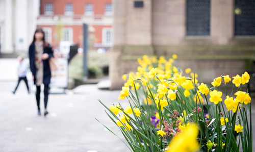 Flowers in bloom at The University of Manchester